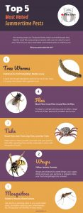 Top 5 Most Hated Summertime Pests