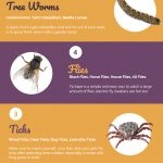 5 Most Hated Summertime Pests - Infographic