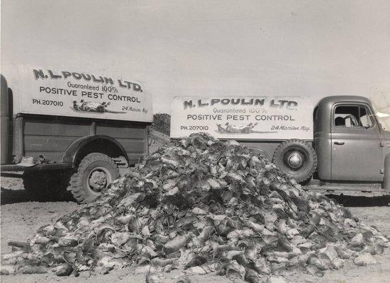 Alberta Rat Control in 1950s