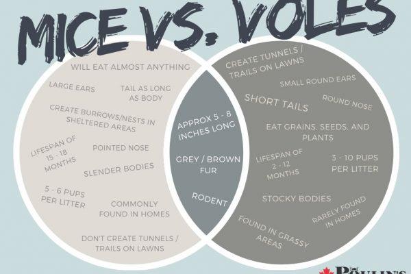 Mice vs. Voles