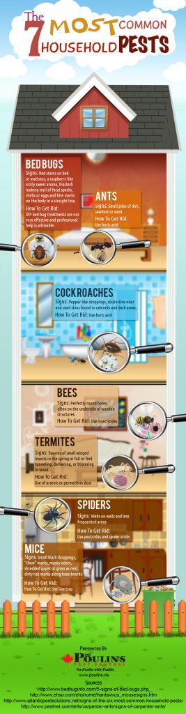 7 Most Common Household Pests