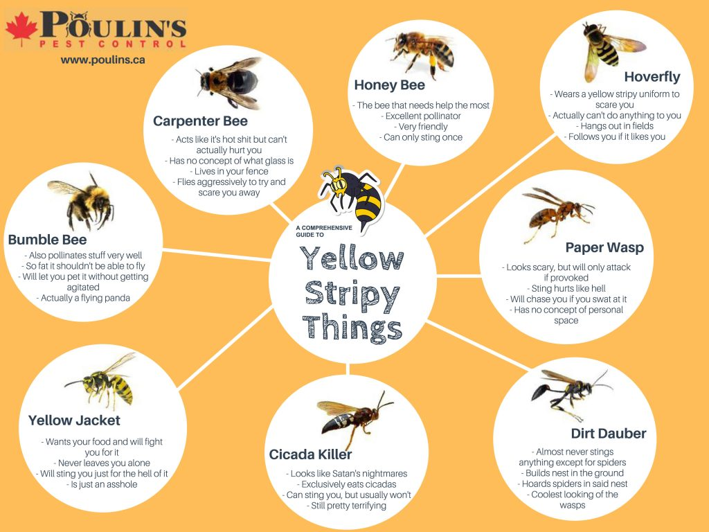 Comprehensive Guide to Yellow Stripy Things