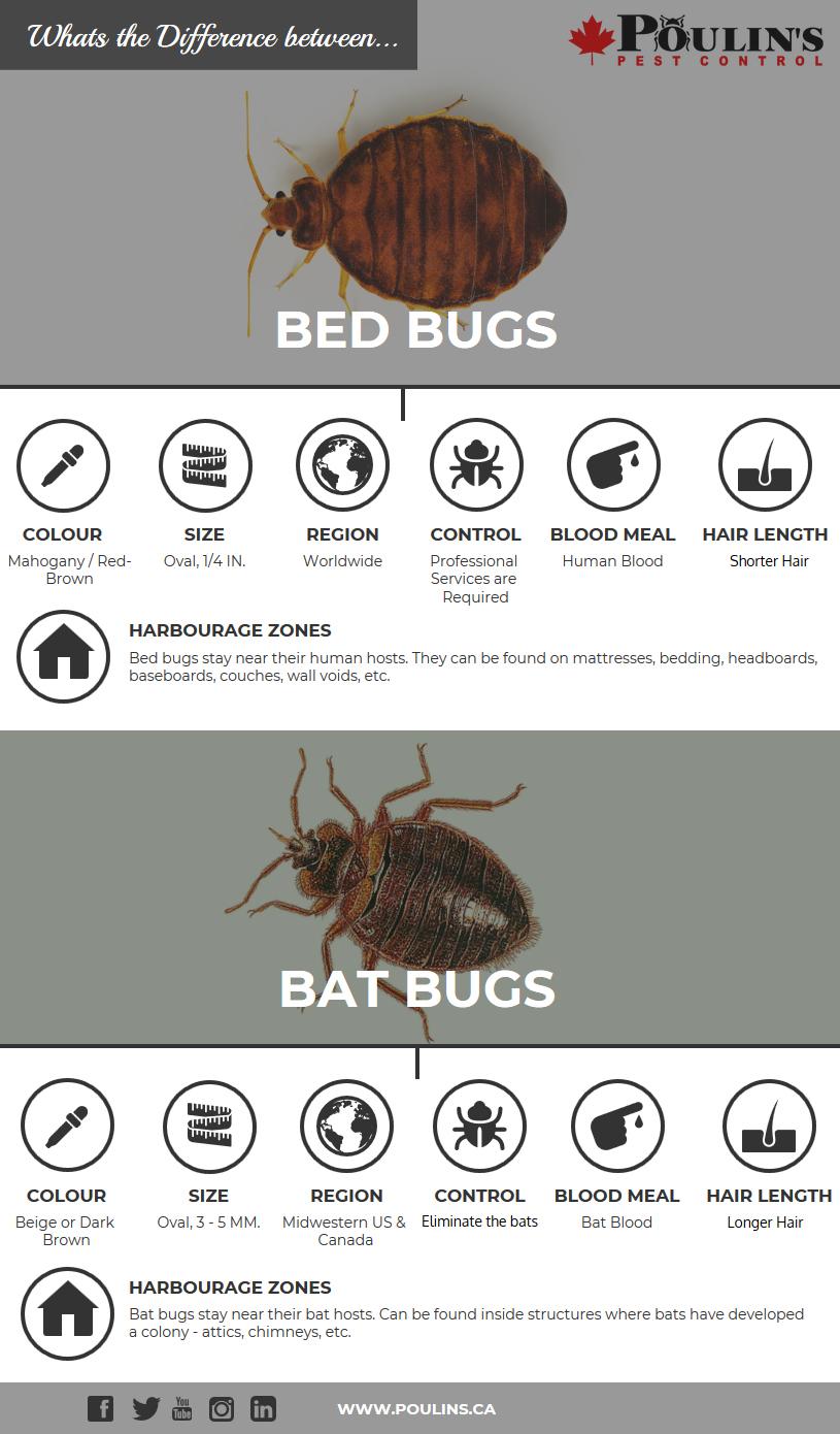 Bug Bug Identifier:
