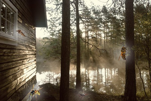 What's Bugging You? 4 Pests You'll Find at The Lake & Cabin
