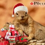 Christmas Ground Squirrel
