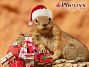 Christmas Ground Squirrel