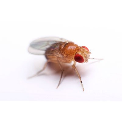 Ask The Expert: Fruit Flies