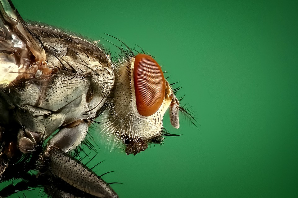 Important Factors in Fly Control