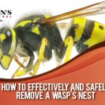 How to remove wasp nest