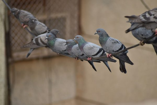Bird Population Control