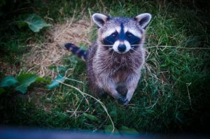 Getting Along with the Neighbours: Living in Harmony with Wildlife
