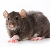 Hantavirus Guide: Clean-Up Procedures