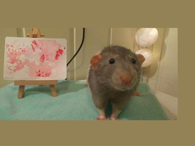 painting rat