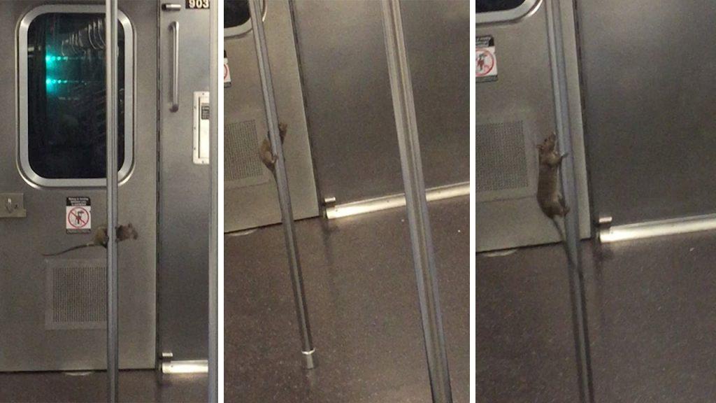 5 Viral Rats