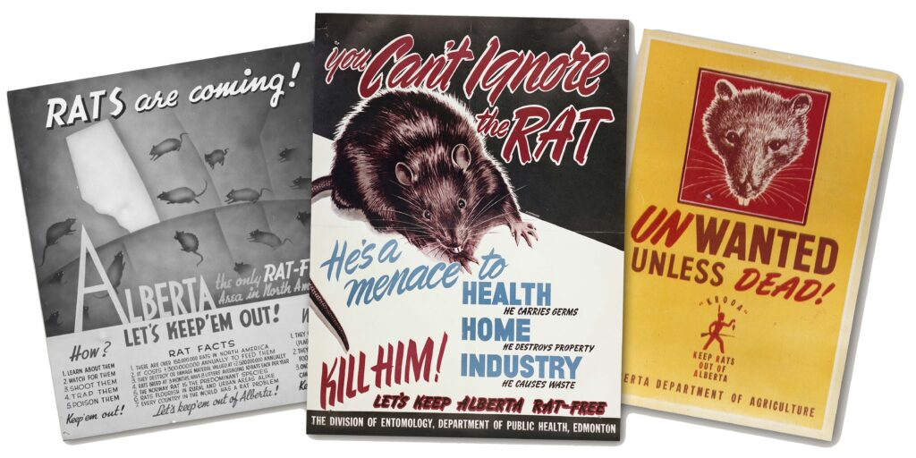 Rat Control Awareness Posters in Alberta 1950